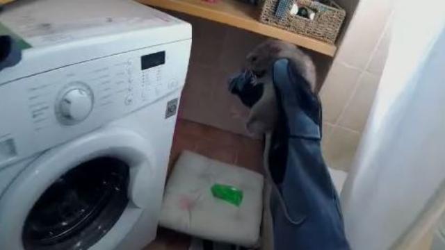 נלכדה מאחורי מכונת הכביסה