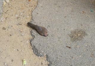 מפגע סביבה ברחוב מאירוביץ' | צילום: פרטי