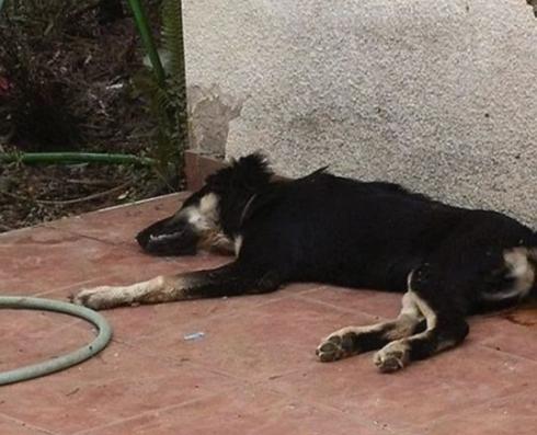 הכלב מת לאחר מספר שעות | צילום ארכיון: תנו לחיות לחיות