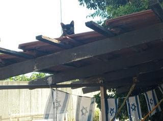 החתולה. צילום: באדיבות תושבים